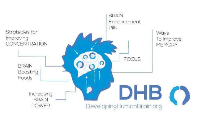 developinghumanbrain.org website