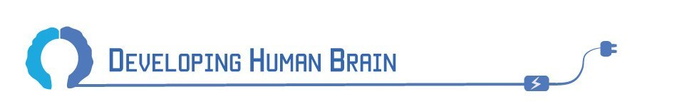 DevelopingHumanBrain header image