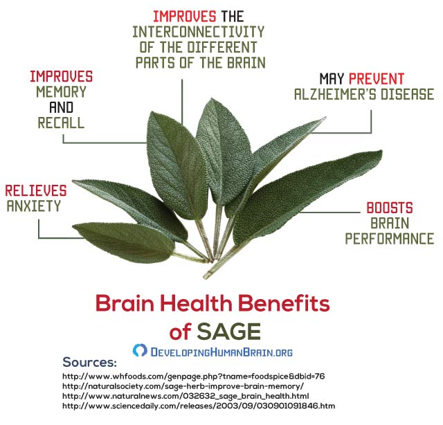 sage for brain function infigraphic