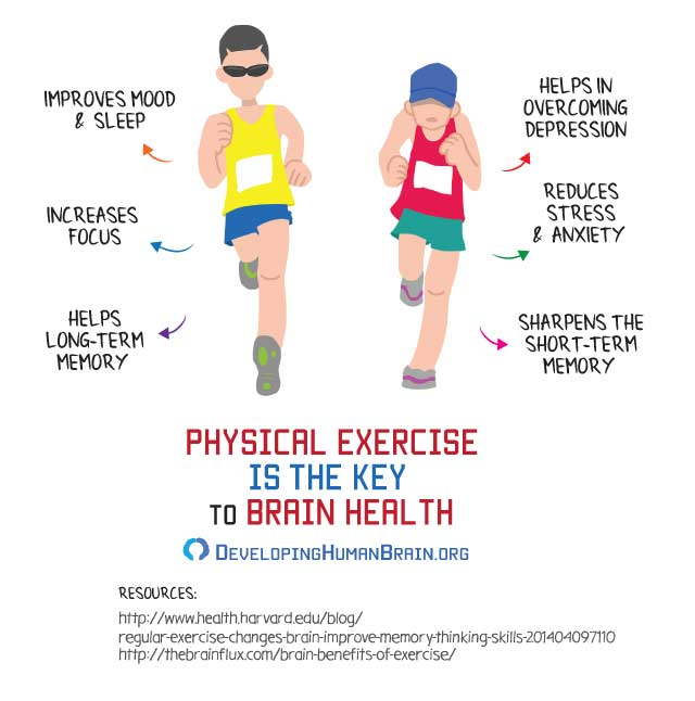 effects of physical exercise on the brain infographic
