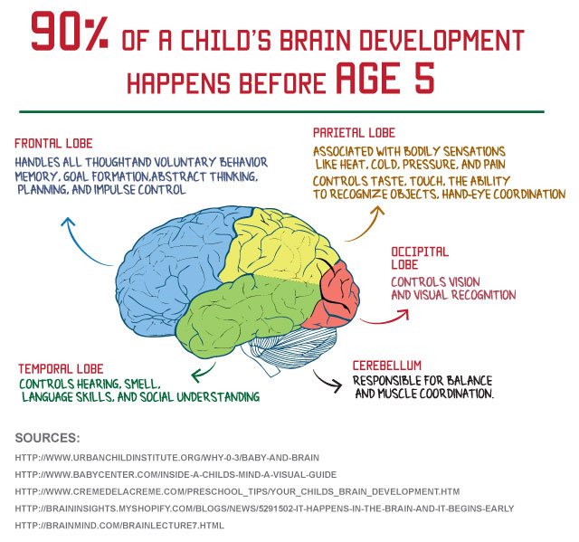 child brain development stages