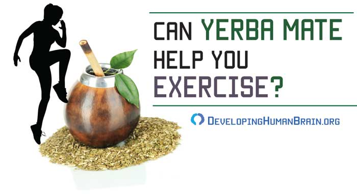 yerba mate for exercise
