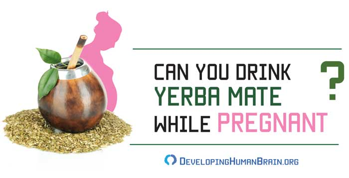 yerba mate pregnancy