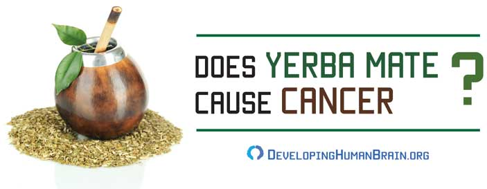 yerba mate cancer