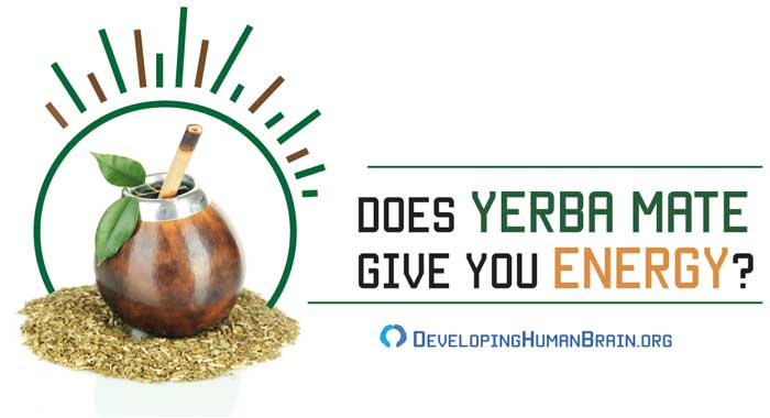yerba mate for energy