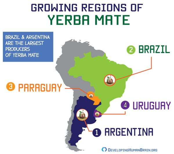yerba mate origin