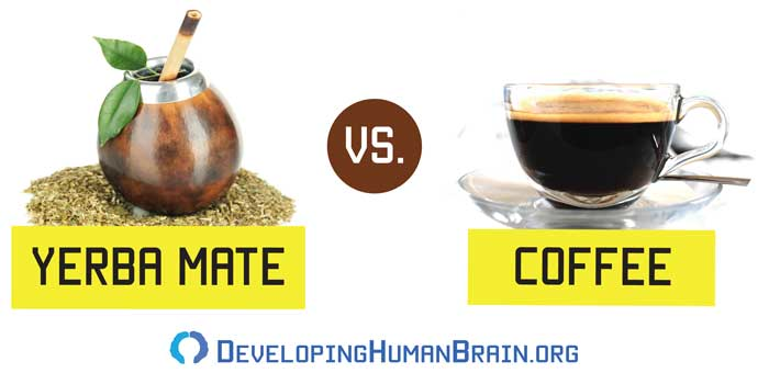 yerba mate vs coffee
