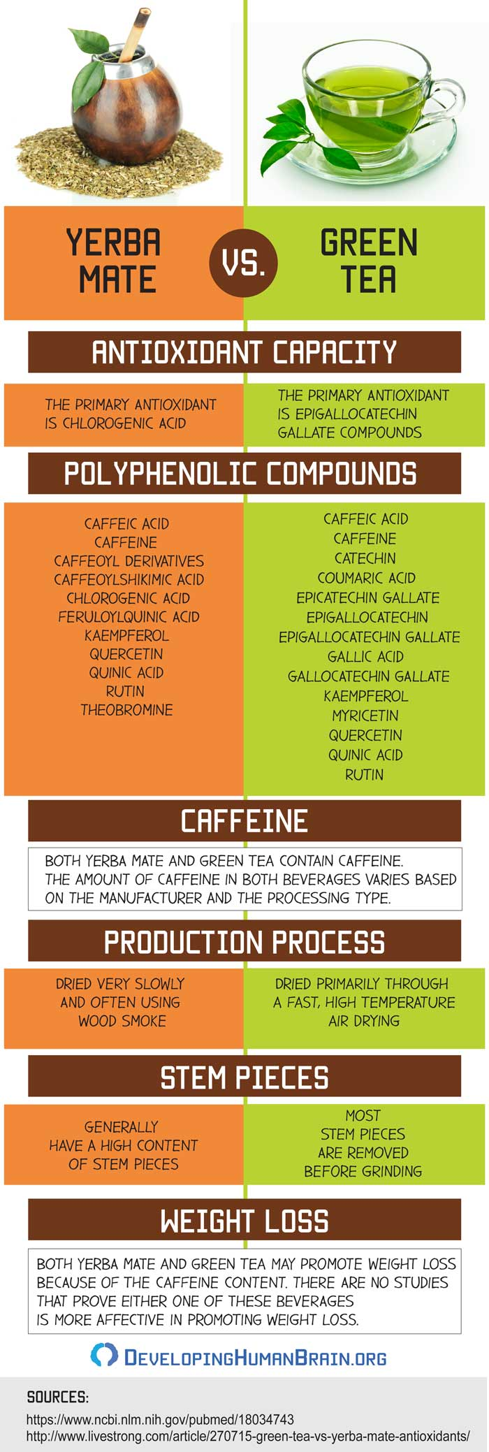 yerba mate vs green tea infographic