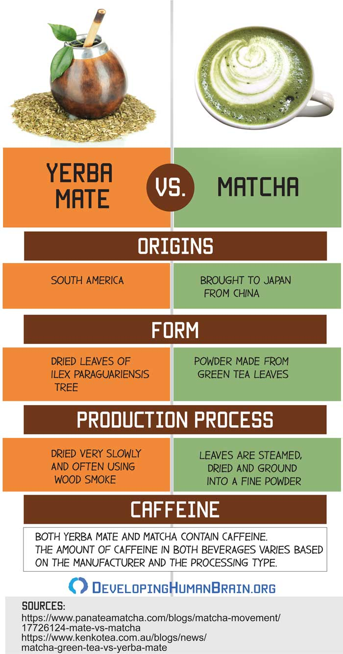 yerba mate vs matcha infographic