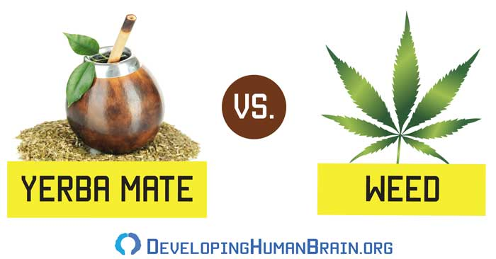 yerba mate vs weed