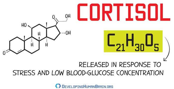 cortisol molecular structure
