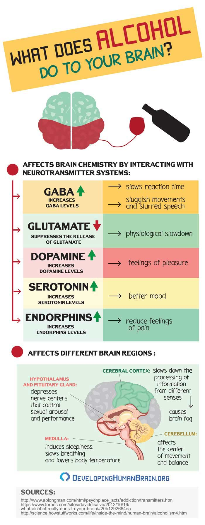 alcohol effects on the brain infographic