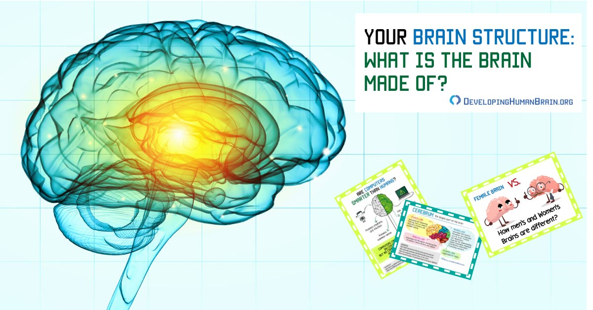 Your Brain Structure What Is The Brain Made Of