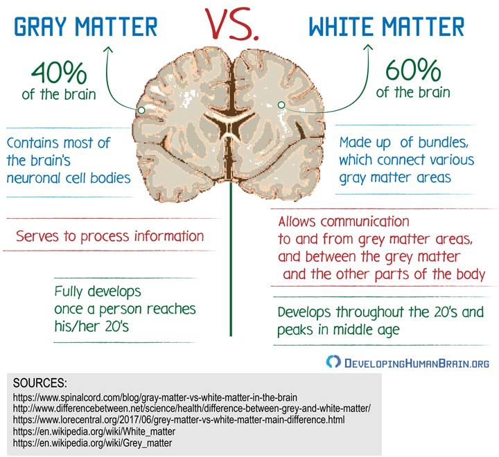 gray matter vs white matter