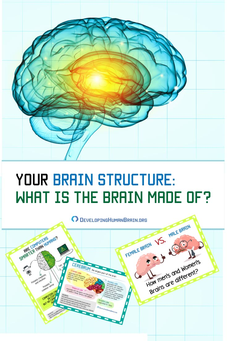How the human brain functions? What part does what? What is it made of? What does it need to work optimally? What makes human brain different? What percent of the brain do we use? Find out all the answers and much more in our comprehensive article here.