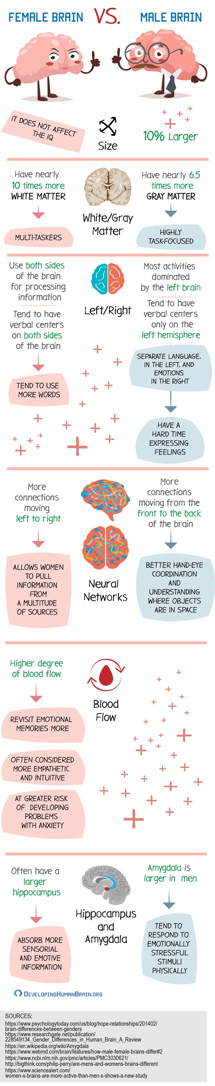 female brain vs male brain infographic