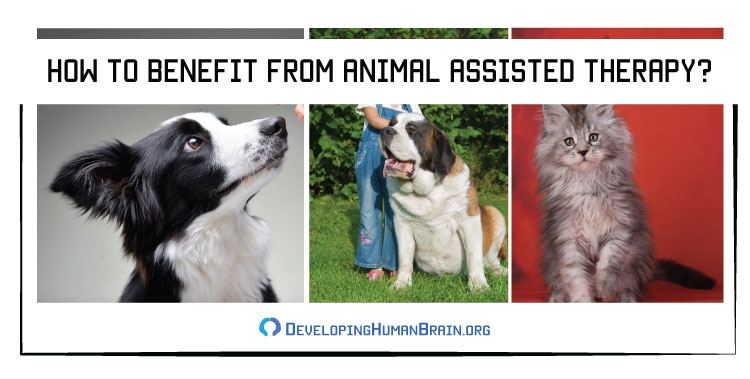 how to benefit from animal assisted therapy